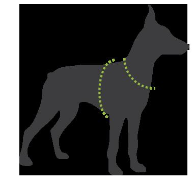 744d5c37c Saiba como escolher o tamanho certo do Peitoral e Guia Don Dog Aquarela  para o seu cachorro. Acesse nosso Guia Como Medir Seu Cão.