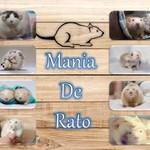 Mania de Rato Criação