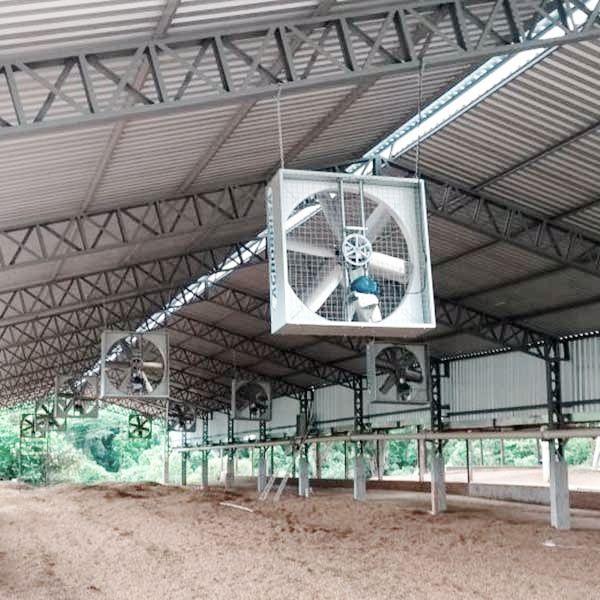 ventilacao-compost-barn-agrobrisa