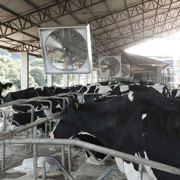 ventilador-free-stal-agrobrisa-ventilacao