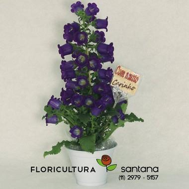 Flor Campânula Lilás plantada