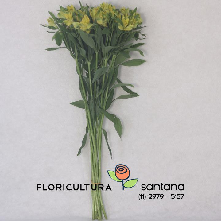 flor Alstroemeria atacado