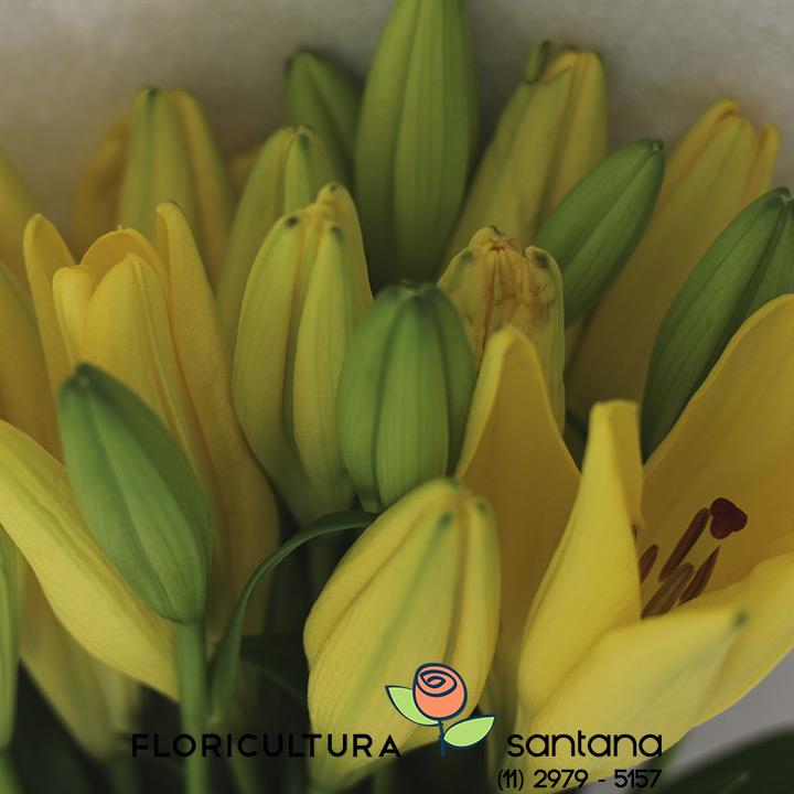 Lirio flor atcado