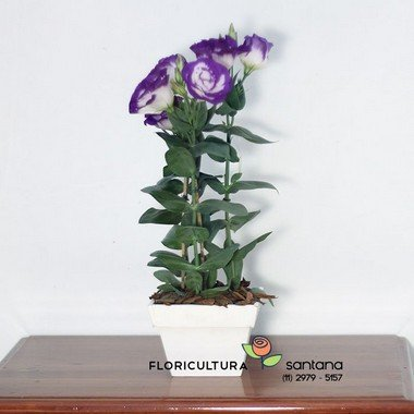 Flor de Lisianthus natural na mesa