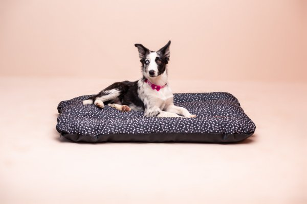 Colchonete para Cachorro Mabuu - Dots Preta