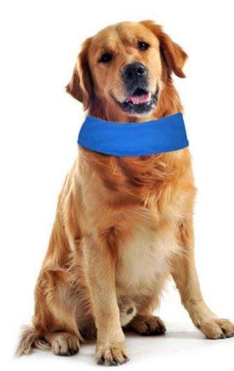 Colar Gelado para Cães - Tamanho M