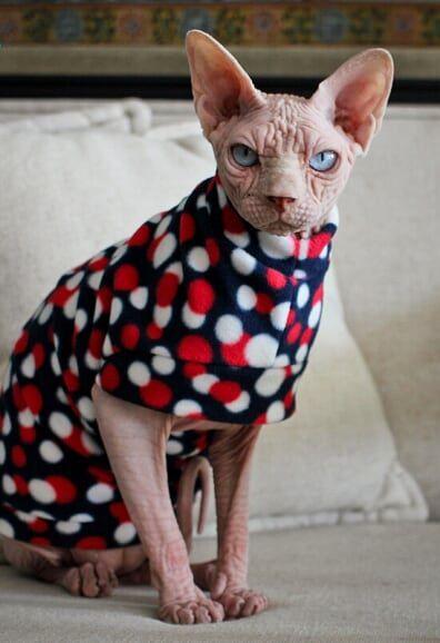 Roupinha para Gato Basic Soft - Bolinha Azul - M