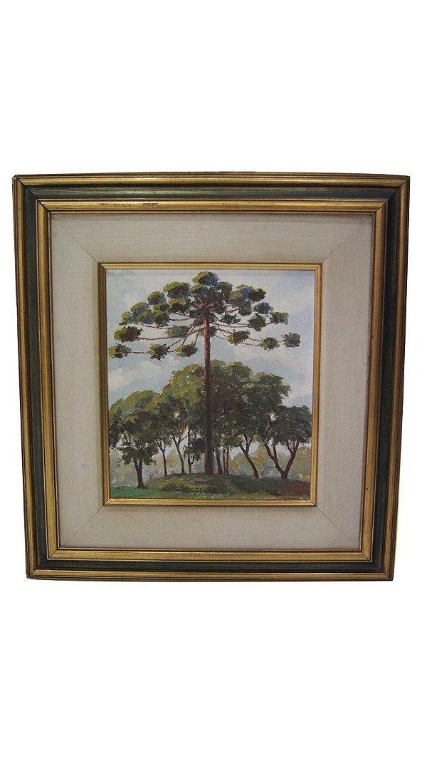 Quadro Pintura Óleo Sobre Tela Araucária - Augusto Conte