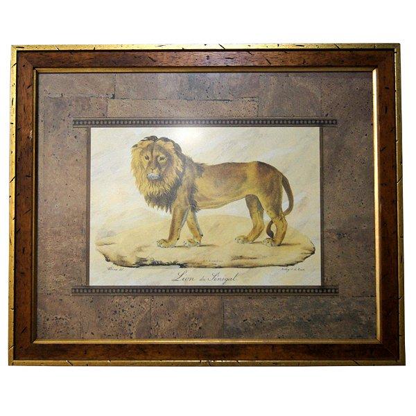 Quadro Imagem Lion du Sénégal Werner Del. 56x46 cm