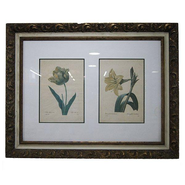 Quadro/Gravura 'Tulipa Culta.142 By Langlois & Amaryllis Bre