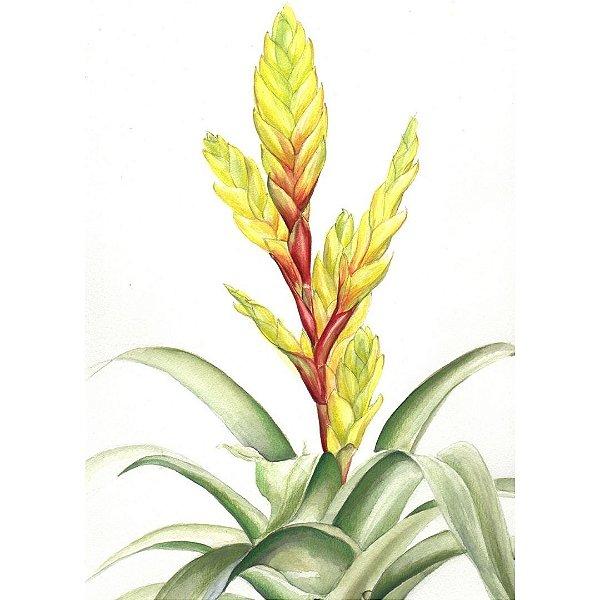 Curso de Ilustração Botânica