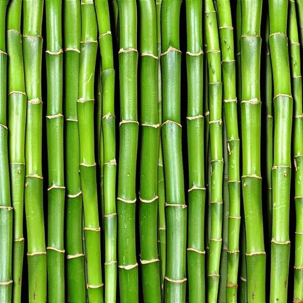 4909 - Essência Bambu MM 100ml