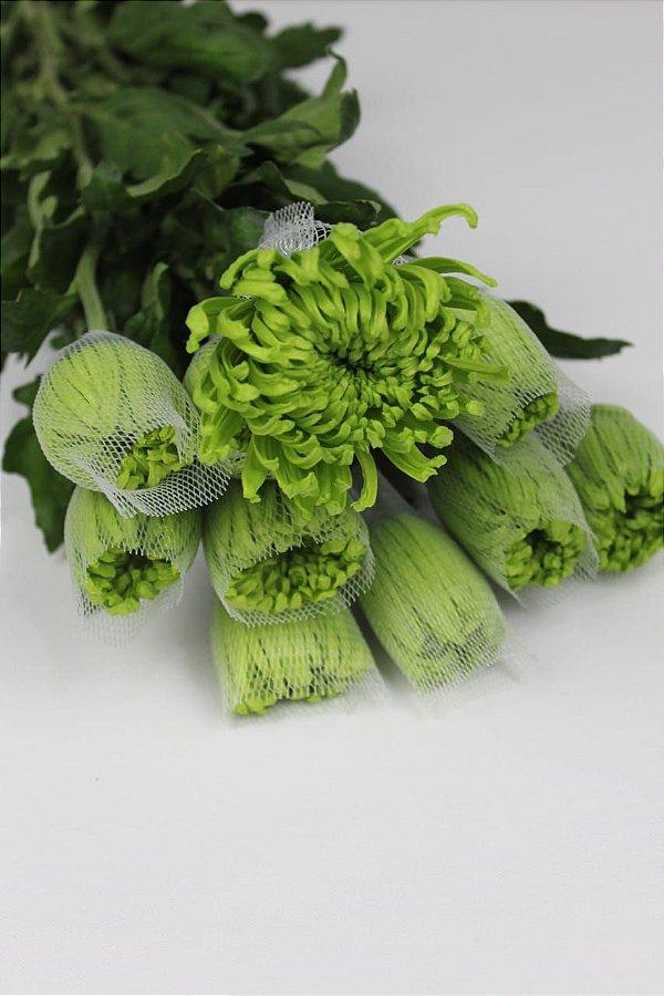 Anastácia  Verde - maço com 10 hastes