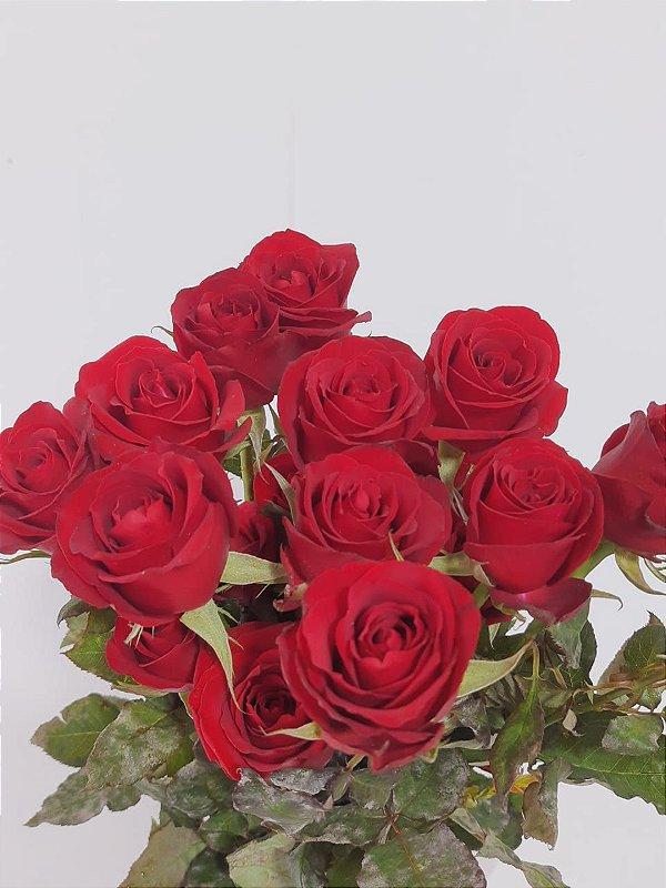 Rosa Vermelha-  20 botões