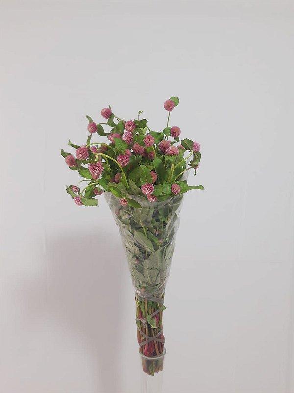 Perpétua Rosa