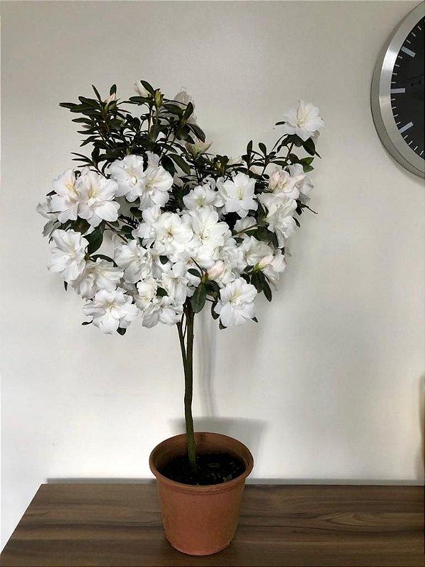 Azaléia variada - Pote 20 -  Árvore vaso