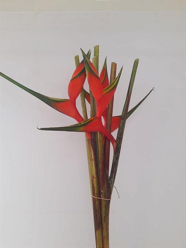 Helicônia Bihay - maço