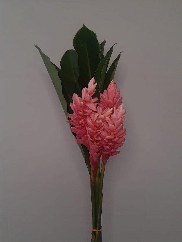 Alpinea Rosa