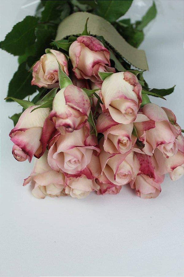 Rosa cor de rosa - 20 botões