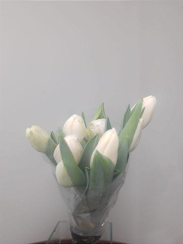 Tulipa Branca - 10 hastes