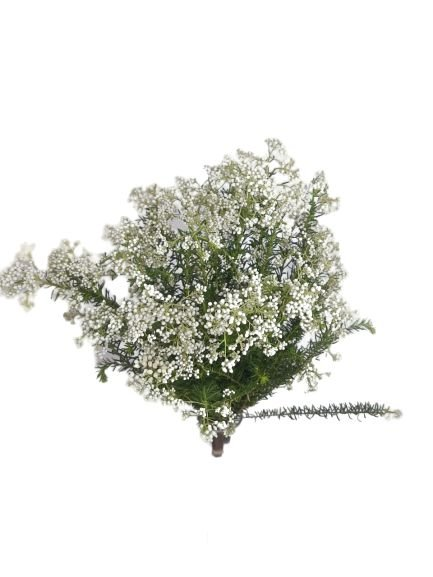 Flor de arroz - maço 10 hastes