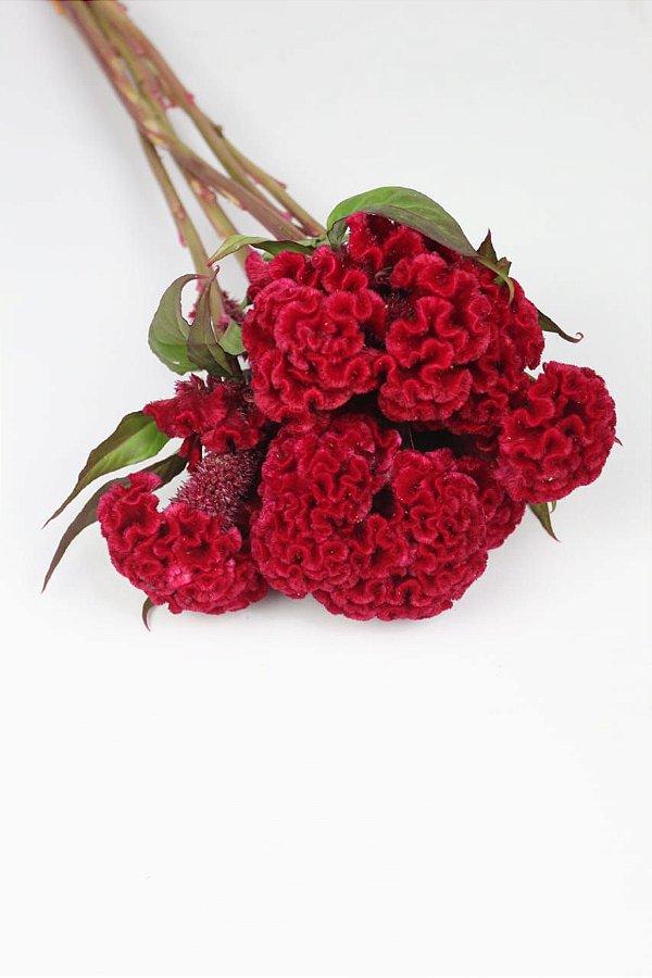 Celosia vermelha - 5 hastes