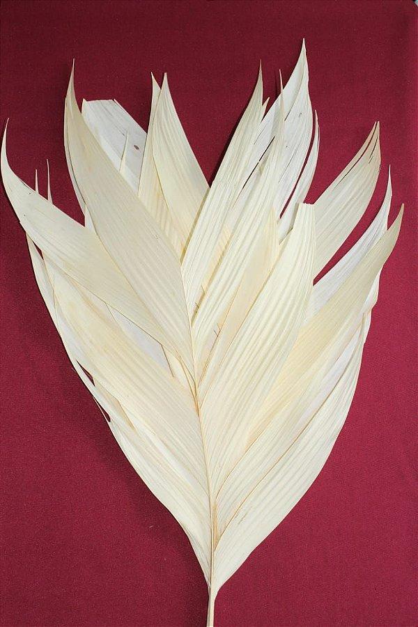Folha de aricana