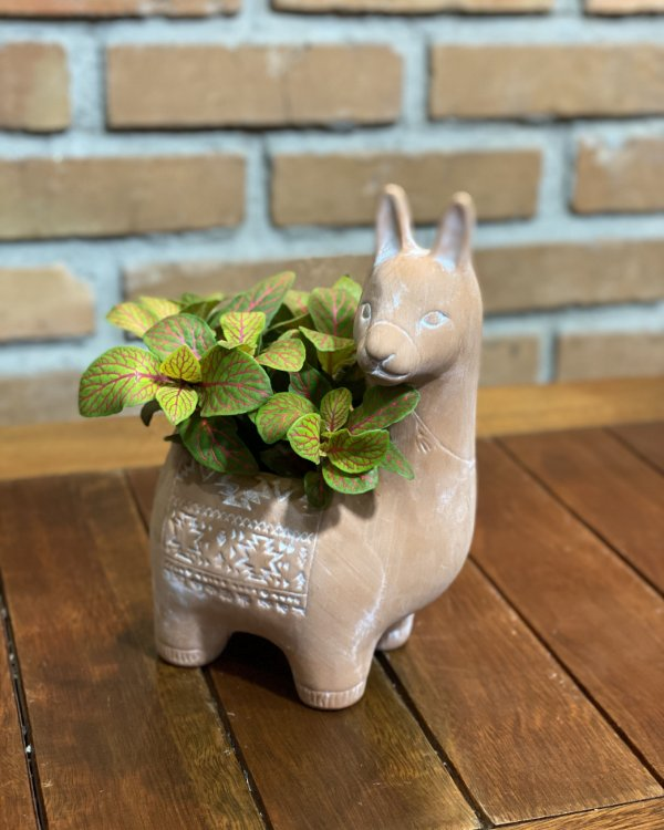 Vaso cerâmica lhama + Fitônia