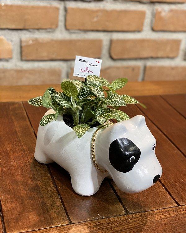 Vaso cerâmica Cachorro com coleira + Fitônia