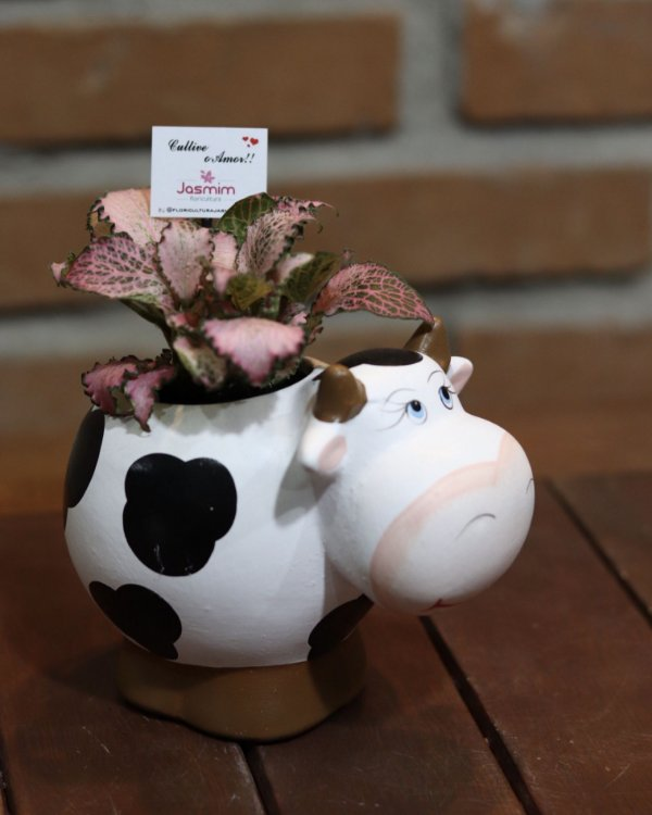 Vaca em cerâmica +  Fitônia