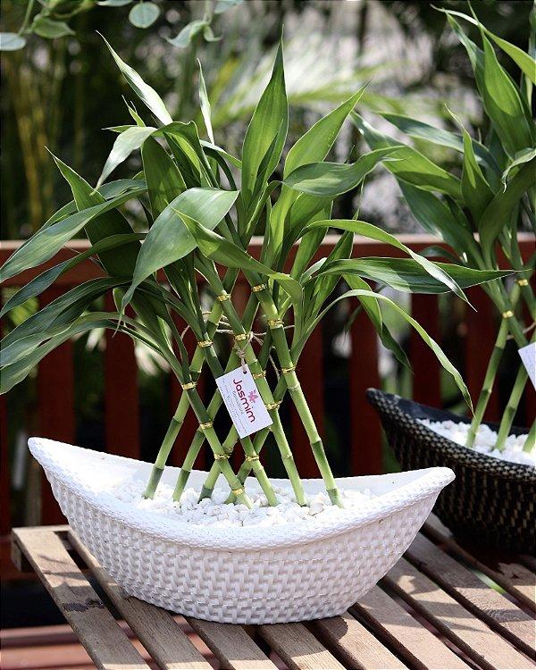 Bambu da Sorte no Barco