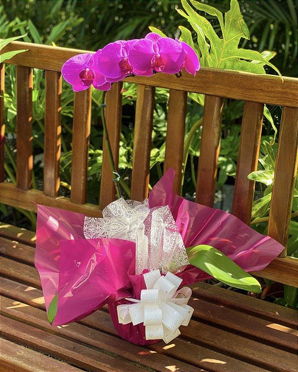 Orquidea Phaleanopsis Pink