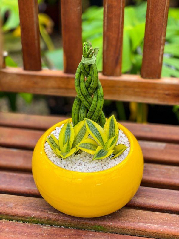 Arranjo Vibrações em vaso de louça G amarelo