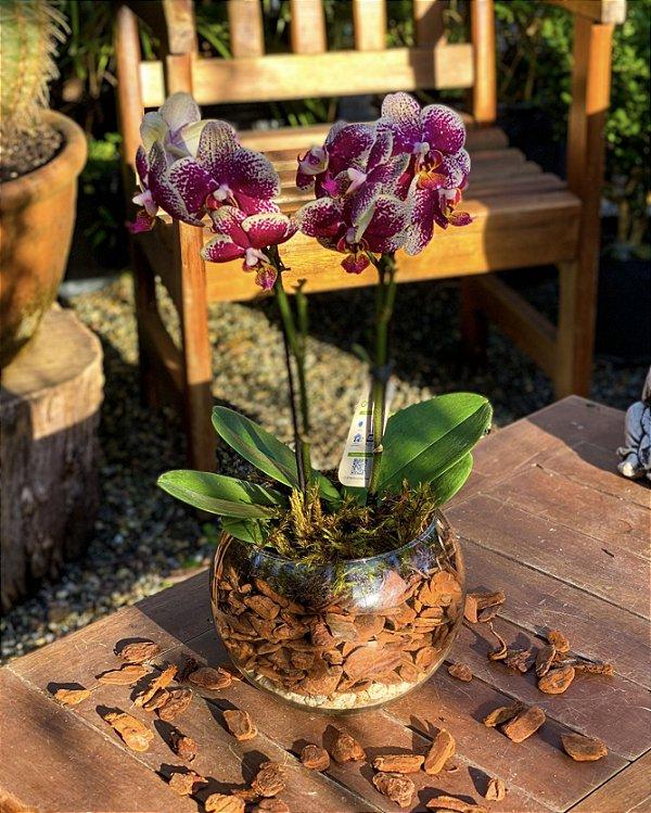 Orquídea Phaleanopsis Luxo em cachepot de vidro
