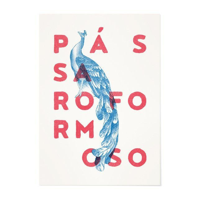 Poster A3 - Pássara Formoso