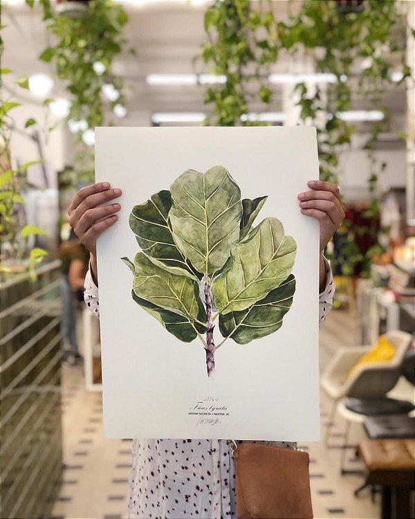 Ficus Lirata - Jardim Secreto + Nestor Jr