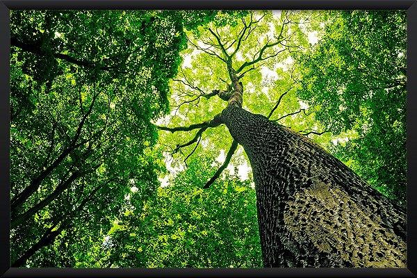 Quadro Floresta Verde