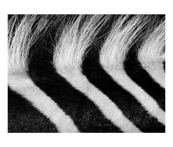 Jogo Americano (Kit 4 Unidades) Nerderia e Lojaria zebra pelagem colorido
