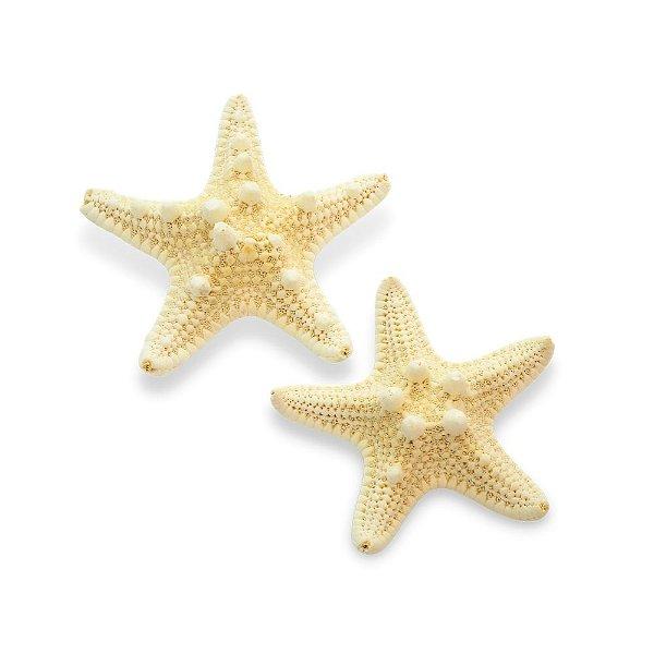 Presilhas de Estrela do Mar