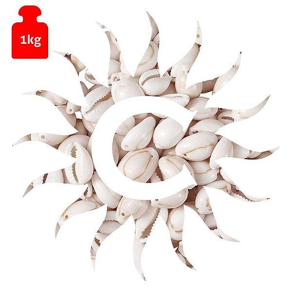 Buzio - Branco - Fechado - Pequeno - 1 Kilo