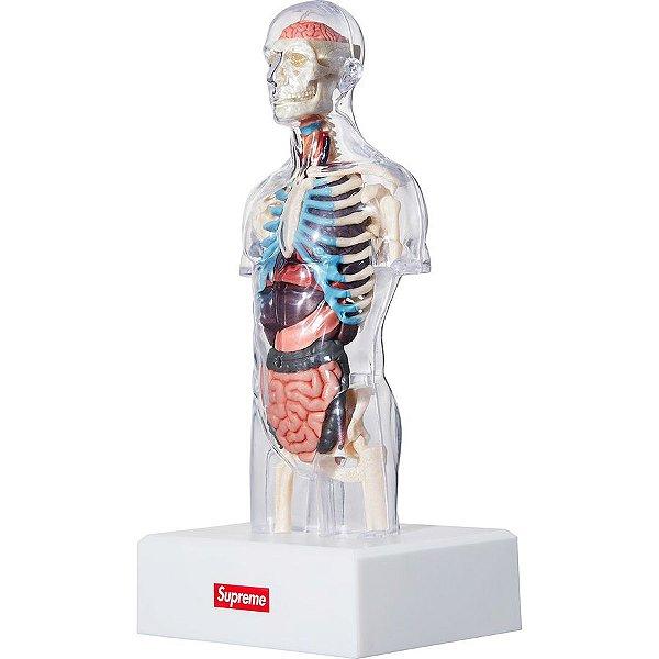 !SUPREME - Boneco Anatômico Torso Masculino -NOVO-