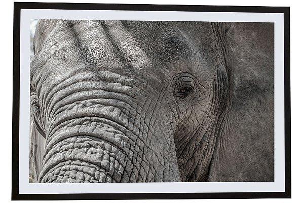 Quadro moldura de madeira Elefante África I - Silvana Tinelli