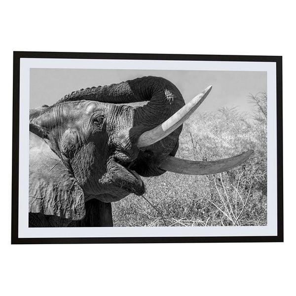 Elefante II - África