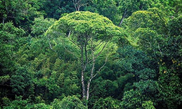 Costa Verde (Metacrilato)