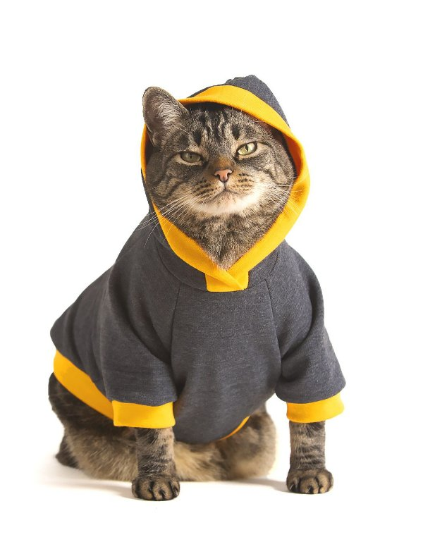 Moletom Grafite e Amarelo| Roupa Para Gatos