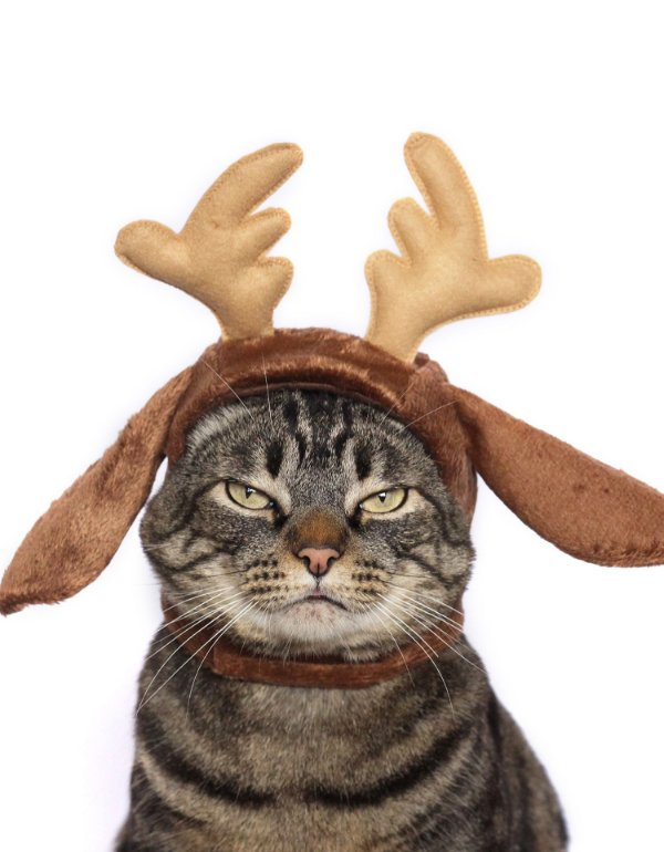 Rena de natal | Para Gatos
