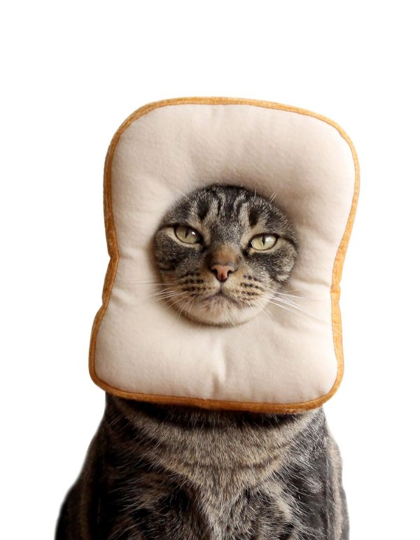 Fantasia de Pão de Forma | Para Gatos