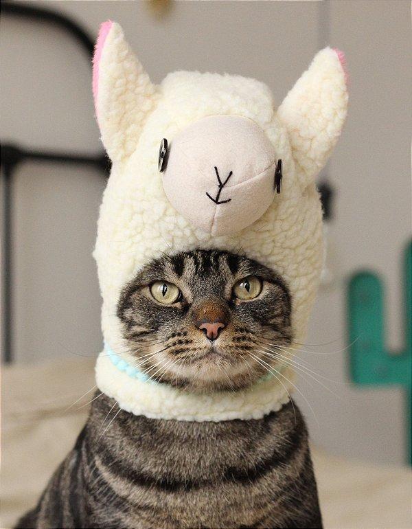 Fantasia de Lhama | Para Gatos