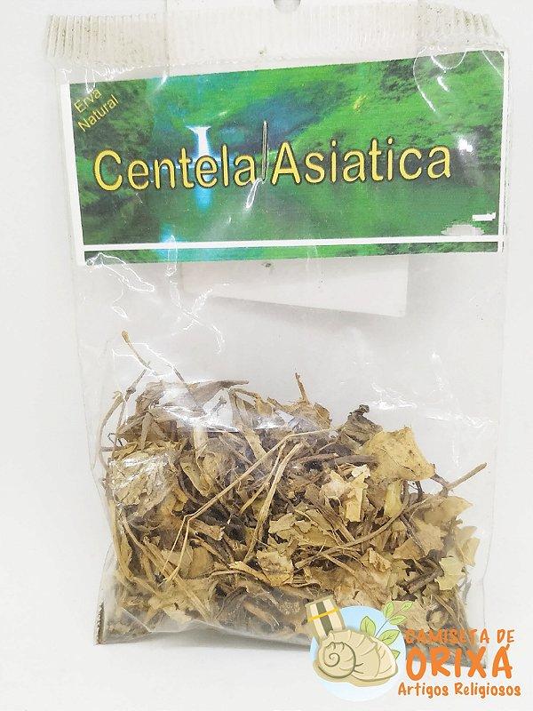 Erva Centelha Asiatica