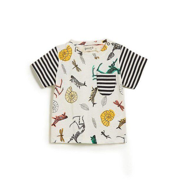 Camiseta Fosseis